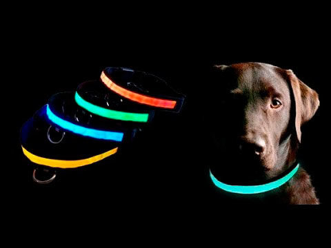 Luminous-Collar-For-Dog1_enl.jpg